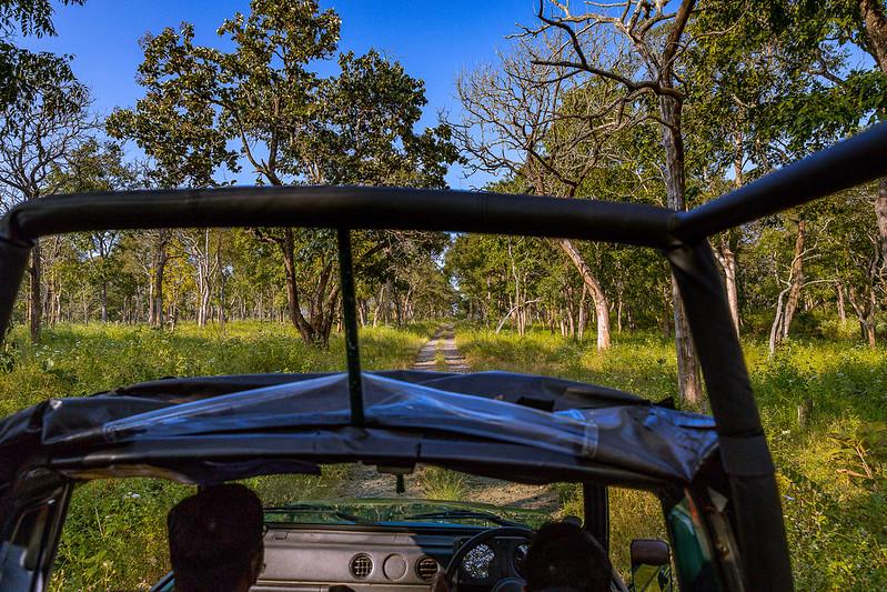 Bandipur Wildlife Sanctuary and Safari - Corporate Team outing near Bangalore