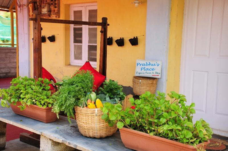 corporate team outing farm stay in ooty
